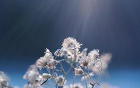 Картинка растение, фон, свет, макро