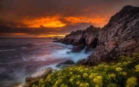 Обои море, закат, цветы, скалы