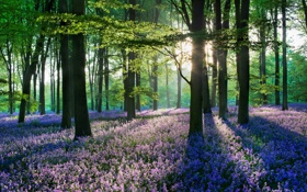 Обои трава, листья, солнце, лучи, свет, деревья, цветы