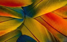 Обои макро, цветные, перья, wallpapers