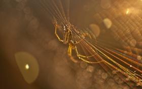 Обои макро, лучи, свет, паутина, паук, насекомое