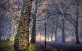 Картинка город, туман, парк