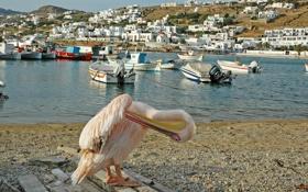 Обои город, река, фото, дома, лодки, Греция, пеликан