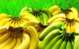 Обои зелень, трава, желтые, зеленые, бананы, фрукты, много
