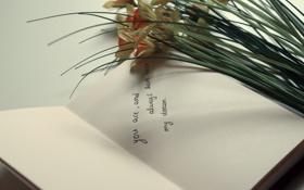 Обои цветы, текст, записка, страницы