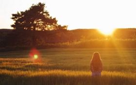 Картинка поле, лето, девушка, закат, настроение