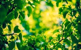 Обои зелень, листья, макро, размытость, боке