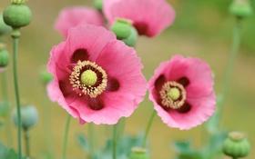 Обои поле, макро, цветы