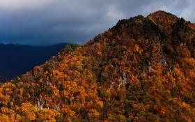 Обои осень, лес, небо, горы, тучи, краски, Япония