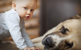 Картинка собака, мальчик, ребёнок