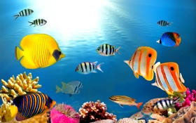 Обои ocean, fishes, tropical, reef, coral, underrwater
