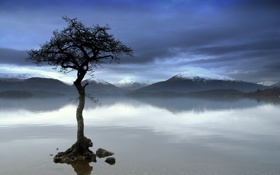 Картинка горы, отражение, река, дерево