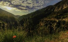 Обои трава, облака, горы, скалы, Франция, маки, Альпы