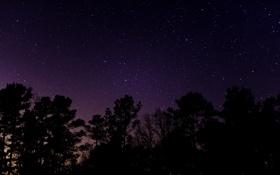 Обои деревья, звездное небо, вечер