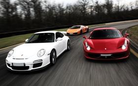 Картинка белый, деревья, оранжевый, красный, гонка, Lamborghini, 911