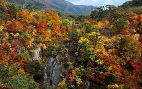 Обои осень, лес, небо, деревья, горы, скалы