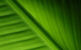 Обои green, leaf, lines