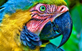 Обои head, parrot, beak, eyes