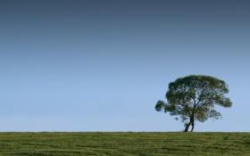 Обои поле, трава, деревья, фото, дерево, пейзажи, вид