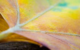 Обои листья, макро, обои, фото, листок
