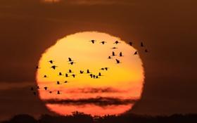 Обои осень, птицы, ночь, полёт