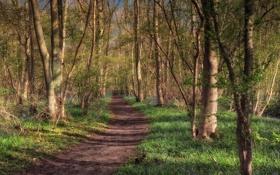 Картинка дорога, лес, деревья, природа
