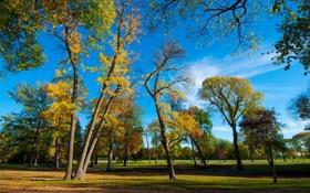 Обои листья, осень, трава, деревья, небо, парк