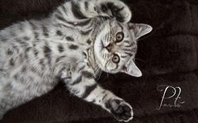 Картинка котенок, стол, обои, лапки, на рабочий