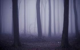 Картинка леса, фото, туманы, дымка, дерево, листья, деревья