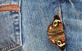 Обои fabric, jeans, butterfly