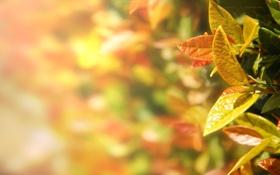 Картинка природа, листья, растения