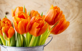 Обои листья, оранжевые, тюльпаны, горшок, крупным планом