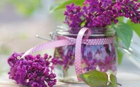 Обои цветы, весна, банка, сирень, сиреневые