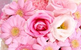 Обои розы, лепестки, герберы
