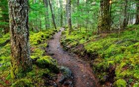 Картинка тропа, лес, деревья, природа