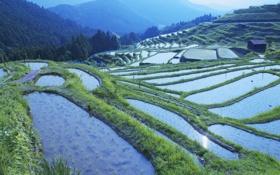 Обои деревья, горы, холмы, рисовые поля