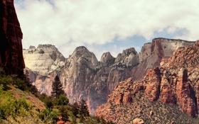 Обои небо, деревья, горы, Zion National Park, Utah, национальный парк Зион