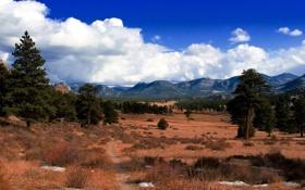 Обои долина, небо, трава, деревья, холмы