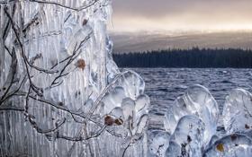 Обои лед, лес, небо, листья, облака, река, куст
