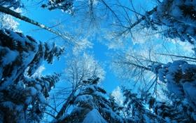 Обои зима, лес, снег, деревья, небо