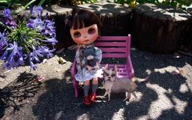 Обои кот, игрушки, кукла, скамья