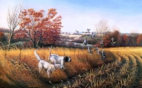 Обои поле, осень, утки, собака, живопись, Bird Dog Country, John S. Eberhardt