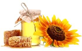 Картинка мед, банка, белый фон, соты, подсолнух