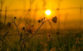 Картинка цветок, небо, солнце, макро, закат, растение