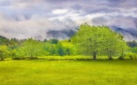 Обои пейзаж, поле, дерево, лето