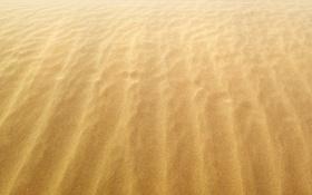 Обои песок, ветер, берег, побережье, желтые, песчинки, пески