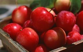 Картинка лето, солнце, корзина, яблоки, сливы