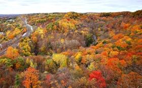 Картинка лес, река, Канада, Онтарио, осень, рельсы, деревья