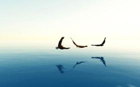 Картинка море, небо, полет, птица, дымка