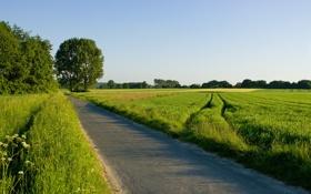 Обои дорога, деревья, природа, пейзажи, фотографии